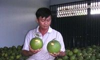 Ben Tre's pomelo earns geographical indication