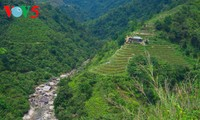 Ha Giang terraced fields ready for new crop