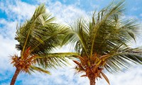 Nam Yet, isla de cocos en el archipiélago de Truong Sa