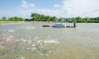 Vietnam traza la meta de lograr 9 millones de dólares el valor de exportación acuífera