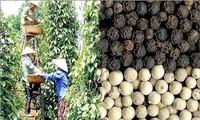 Oportunidad de los productos agrícolas vietnamitas