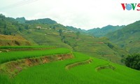 Pesta menyambut nasi baru dari warga etnis minoritas Gie Trieng