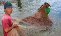Vietnam busca desarrollar la industria del camarón con avances tecnológicos