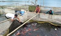 Vietnam persevera en la reducción sostenible de la pobreza
