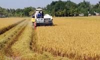 Vietnam impulsa la formación vocacional de la mano de obra agrícola