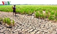 Países miembros de la Comisión del río Mekong unidos para superar el bajo nivel de agua