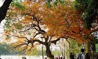 El fascinante otoño de Hanói en la música