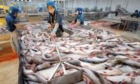 Exportación de pangasius vietnamita logra cifra récord