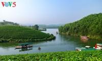 La belleza de las islas de té Thanh Chuong