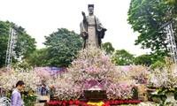 Festival de flor de cerezo Hanói 2019 atrae atención pública