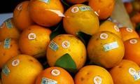 Naranja, producto estratégico de la provincia norteña de Hung Yen