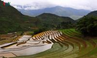 Mu Cang Chai nombrado entre los 50 lugares más bellos del mundo