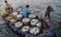 合作管理东海渔业和保护海洋环境