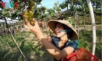 越南旅游景点接待众多春游游客