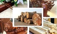 2019年林业部门力争出口105亿美元