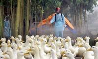 Les préventions contre la grippe aviaire 2019-2025