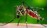 Zika cases detected in many countries