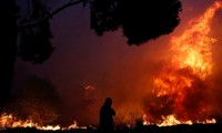 Greek wildfires kill 60
