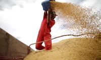 China stops buying US farm produce