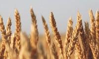 Die USA siegen gegen China beim Streit über Getreidesubventionen