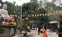 Les pagodes au printemps