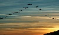 Программа «Добро пожаловать,  перелетные птицы» подчеркивает важность охраны данных видов птиц