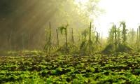 Жизнь в гармонии с природой в селении Шиньзыок