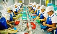 """Delegasi kerja EC melakukan temu kerja dengan pimpinan Vietnam tentang penghapusan """"kartu kuning"""" terhadap perikanan"""