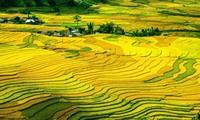 Mu Cang Chai lolos masuk Kelompok atas  destinasi yang paling bertata warna di dunia