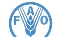 FAO-Konferenz: verstärkte Nahrungsmittelsicherheit und Armutsbekämpfung
