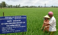 Verbesserung des Exportwerts von vietnamesischem Reis