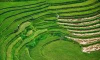 Muong Hoa: Das romantische Tal in Sapa