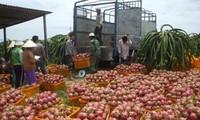 Vietnam will verstärkt landwirtschaftliche Produkte exportieren