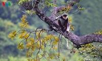 Eine einzigartige Fotosammlung über den König der Primaten