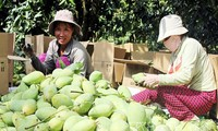 Die Bauern in Dong Thap erwirtschaften durch ökologische Landwirtschaft