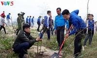 """Viele Provinzen starten """"Baumpflanzenfest"""" zum Schutz der Umwelt"""