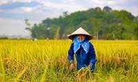 7. Landeskonferenz des vietnamesischen Bauernverbands eröffnet