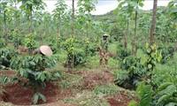 Vietnam bemüht sich um Armutsminderung in den Regionen