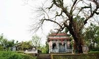 Die Bedeutung des Kulturerbes im klassischen Dorf Phuoc Tich in der Provinz Thua Thien Hue