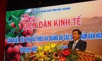 500여개 기업, Bac Giang의 리찌 소비 촉진