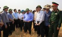 越南政府副总理阮春福考察西原旱情