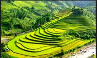 安沛省穆庚寨梯田——西北山区的壮丽奇观