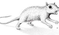 俄罗斯科学家发现远古哺乳动物新物种