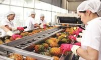 越南水果扩大出口市场