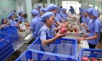 协助越南农产品在韩国市场站稳脚跟