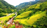 Muong Hoa- a romantic valley in Sapa