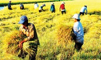 Vietnam aims to generate 32 billion dollars of agricultural exports in 2015