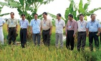 Businesses' engagement in new rural development