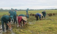 Seeds given to provinces hard hit by natural disasters