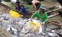 Vietnam to earn 1.6 billion USD from tra fish exports